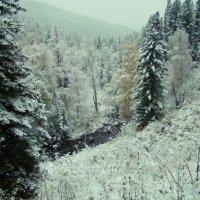 первый снег в тайге :: Надежда Ульченко