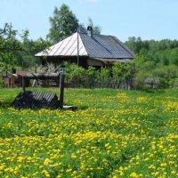 Вот моя деревня, вот мой дом родной... :: Лев Лебедев