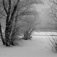 Январским инеем покрыты :: Dr. Olver