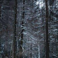 Зимняя :: Алексей Болдырев