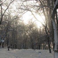 Зима :: Оксана Непоспехова