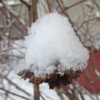 Снег на ветке :: Оксана Непоспехова