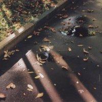 плёночная осень :: Арсения Филатова