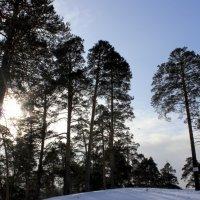 Солнечное утро :: Дарья Островских