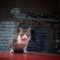 Пугливый кот :: Sergei Khandrikov