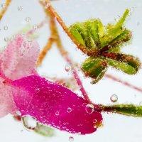 Цвет :: Маргит Фосфат