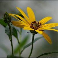 Цветок :: DR photopehota