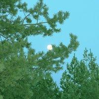 луна :: Сергей Говорков
