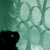 кошка :: Екатерина Старикова