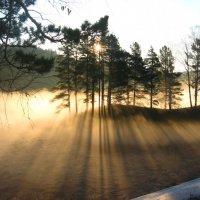 Сквозь туман :: Alex Larionov