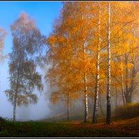 Золотая осень. :: Виталий Внимательный.