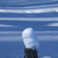 Снежный совёнок :: Сергей Комков