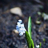 нежный цветочек :: Арсения Филатова