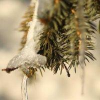 Кусочек зимы :: Виктория Никсдорф