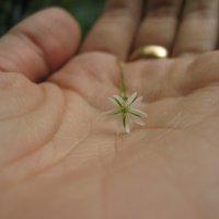цветок :: Лилия Горбачёва