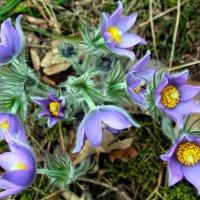 Лесные цветы :: Виктор Желенговский