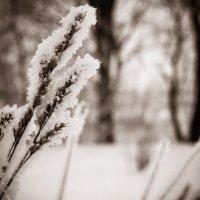 Зима :: Денис Мартынов