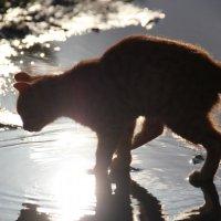 На просвет по воде :: Анастасия Золотарь