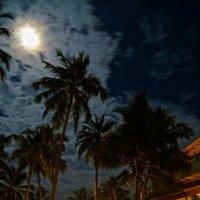 Пальмы и Луна :: Виталий Балан