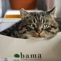 Коробочный кот :: Сергей Бордюков