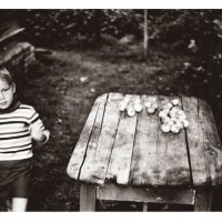 Бабушкины  яблоки :: Геннадий Тарасков