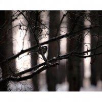 Зима :: Геннадий Тарасков