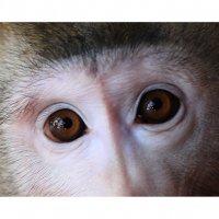 эти  глаза :: Геннадий Тарасков