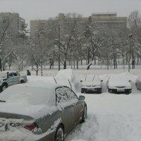 Такого снегопада... :: Галина Петрушкова