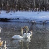 Зимняя любовь :: Владимир Орлов