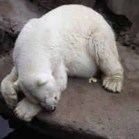 После вкусного обеда полагается поспать... :: Tatiana Markova