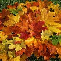 Осенний блюз :: Mariya laimite