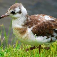 Маленькая, но очень гордая птичка :: Илья Кочанов