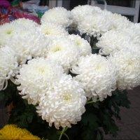 Белые хризантемы :: Татьяна Пальчикова
