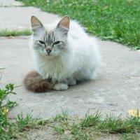 кошка, которая любит фотографироваться :: Таня Кулешова