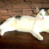 Фьючер - кот . :: Мила Бовкун