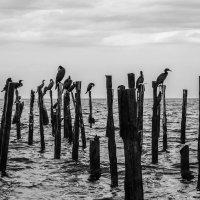 На странных берегах :: Макс Жлудов
