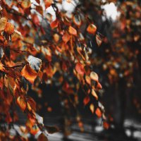Осенний блюз... :: Алексей Шунин