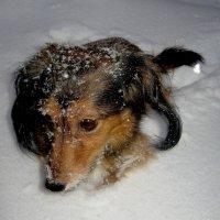 Снежное плаванье... :: Tatiana Markova