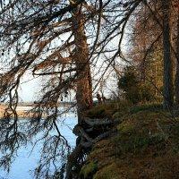 Дерево сильно корнями... :: Galina S*