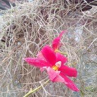 Ботанический сад -орхидеи :: Наталья