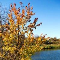Осень у реки :: Пётр П