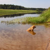 пейзаж с собакой :: Наталья