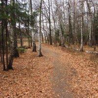 Лосиный остров поздней осенью - IMG_4149 :: Андрей Лукьянов