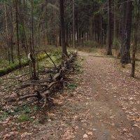 Любимый ельник поздней осенью - IMG_4189 :: Андрей Лукьянов