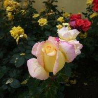 Францисканский Сад в Праге :: Наиля