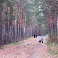 Прогулки в лесу. :: Мила Бовкун