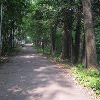 Парк города Партизанска :: Анатолий Кузьмич Корнилов