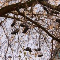 Башмаки на дереве в Потаповском переулке :: Елена Гаврилова lega