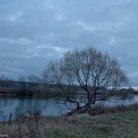 Поздняя осень.Река Дубна. :: Виктор Евстратов