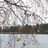 Осенние листья :: Людмила